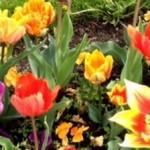 Blumen für die Leser zum Blog-Jubiläum